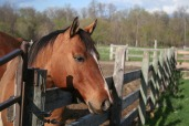 HorseOverFence_2012_4285