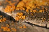OrangePost_2012_4343